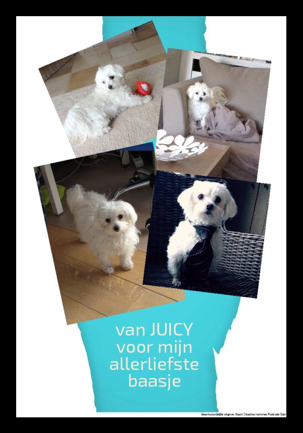Maak je eigen krant sjabloon hondenkrant | Happiedays