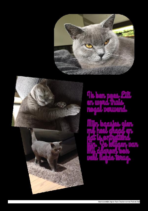 Maak je eigen krant sjabloon kattenkrant | Happiedays