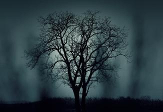 boom halloween toch griezelen